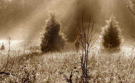 Foggy morning Stock Photo - 5543136