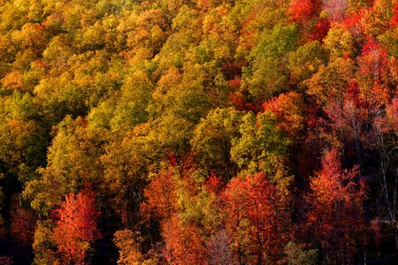 Colorful trees Stock Photo - 5575808