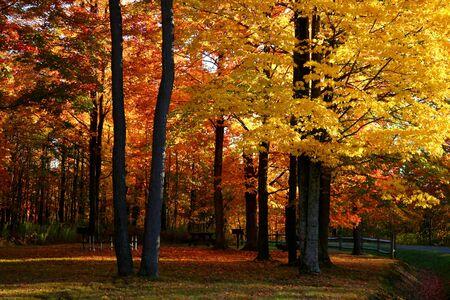 fallcolours: Colorful trees Stock Photo