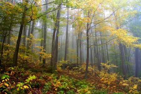Bright autumn colors Stock Photo - 5579733