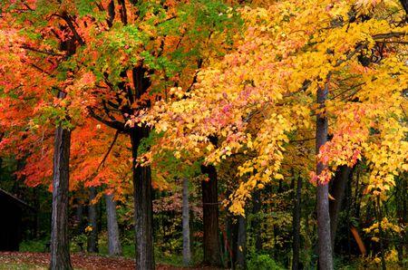fallcolours: Autumn trees