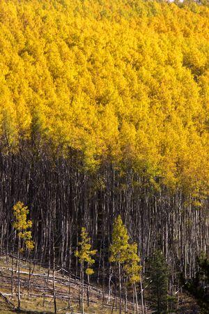 Mountain landscape in Colorado photo