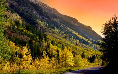 quaking aspen: Scenic Colorado Stock Photo
