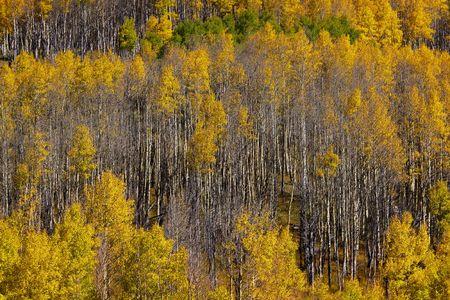 Colorado fall photo