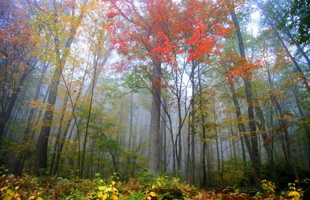 allegheny: Fog in Allegheny mountains Stock Photo