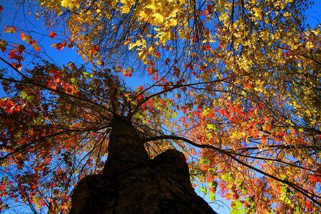 Colorful autumn tree photo