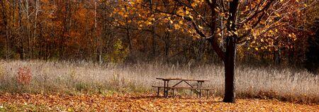 treed: Panoramic view of park Stock Photo