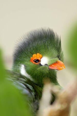 Green bird photo