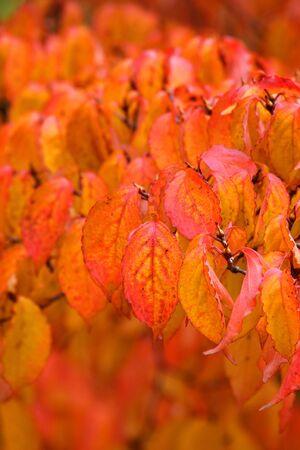 Autumn leaf background Reklamní fotografie - 6049865