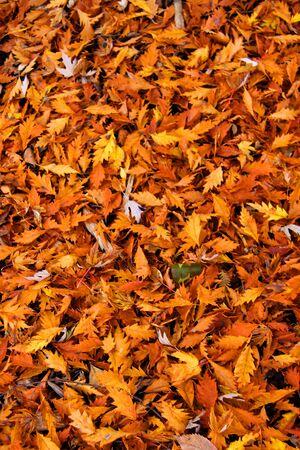 Autumn leaf background Reklamní fotografie - 6049907