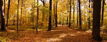 Autumn panorama photo