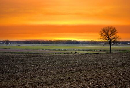 Single tree in the fields photo
