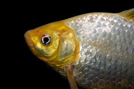 Fish close up Stock Photo - 6162116