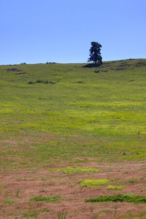 Lonely tree on the hill Stock Photo - 7399596