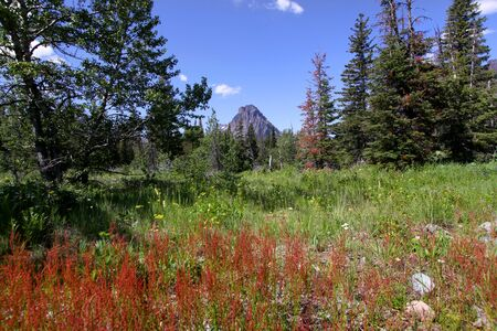 meadowland: Scenic  landscape in rocky mountains  near Glacier national park Stock Photo