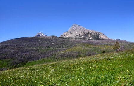 meadowland: Glacier national park Stock Photo