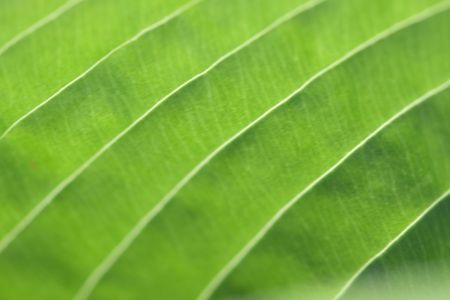 close up shot of green leaf Stock Photo - 7652771