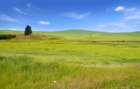 Lonely tree in the middle of Green field Stock Photo - 7652865