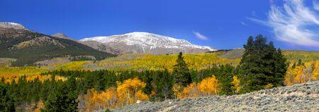 aspen tree: Autumn in Colorado