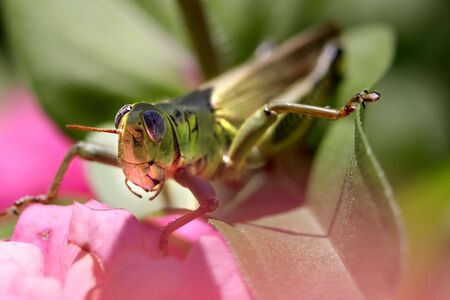 Close up shot of grasshopper on the flowering plant photo