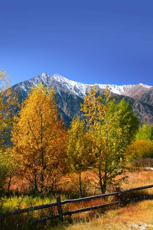 Colorful Autumn trees in Colorado rocky mountains photo
