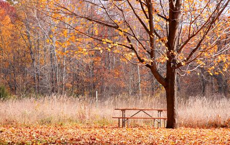 fallcolours: Autumn tree with fallen leaves in the forest