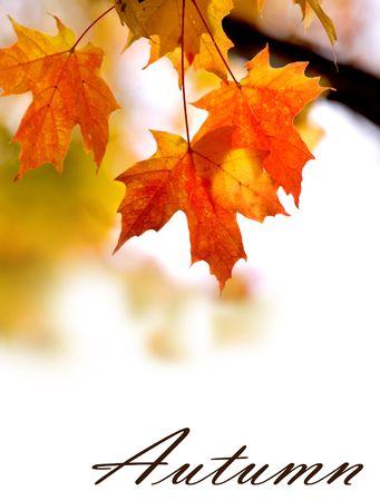 Achtergrond met open ruimte gemaakt met herfst bladeren