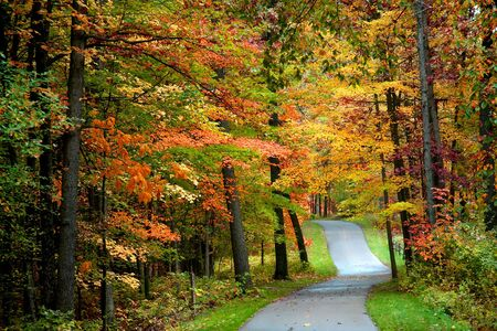 fallcolours: Walk way in the park through colorful trees