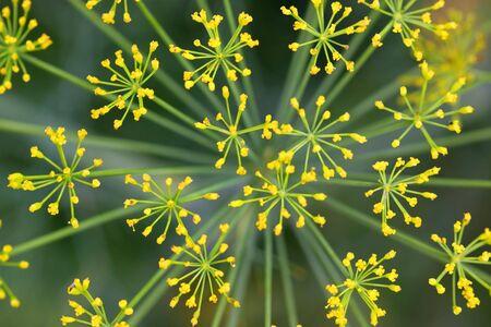 Yellow flower background Stock Photo - 7862617