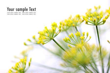 Yellow flower on white background Stock Photo - 7862604