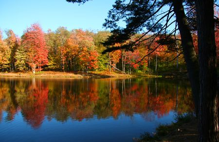 fallcolours: Allegheny national forest