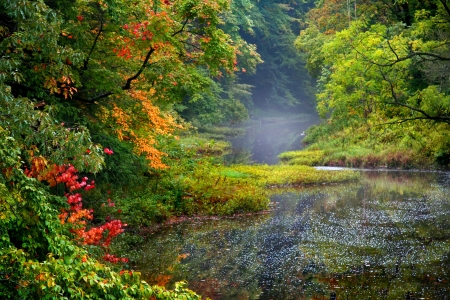 autumn colour: Misty autumn landscape