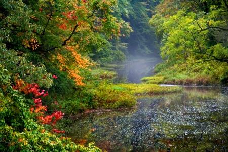 Misty herfst landschap