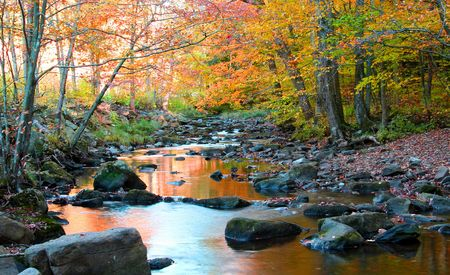 Forest stream flowing through colorful trees in autumn