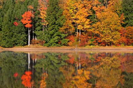 fallcolours: Autumn reflections