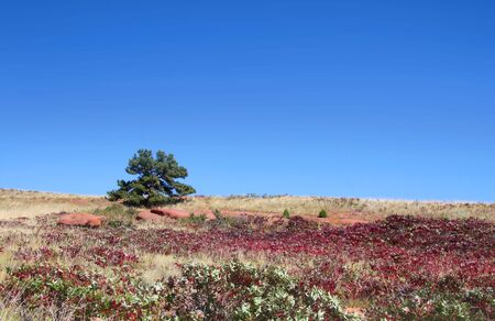 Single tree in the middle of red rocks state park in Colorado Stock Photo - 8060183