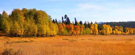 Bright colored autumn trees in Gran tetons national park photo