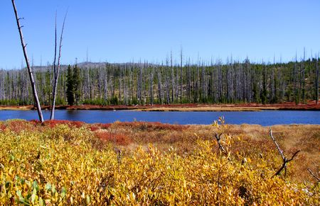 Scenic landscape in yellowstone national park, Wyoming photo