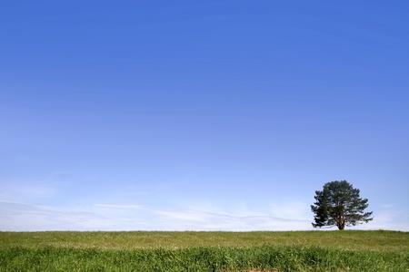 Single tree on a green meadow against blue sky photo