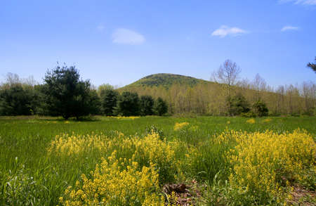 allegheny:  Allegheny national forest in Pennsylvania