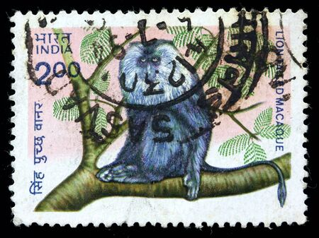 indian postal stamp: INDIA - CIRCA 1983: A stamp printed in India (present time India) shows Lion tailed Macaque, circa 1983