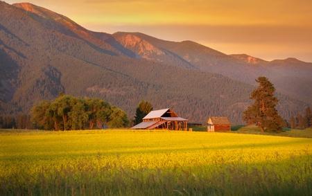 Raapzaad boerderij en schuur in avondzonlicht Stockfoto