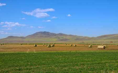 Harvested farms with hay bales in the prairies  photo