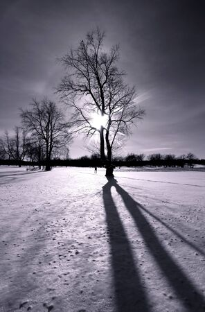 shadow: Winter sun light in black and white Stock Photo