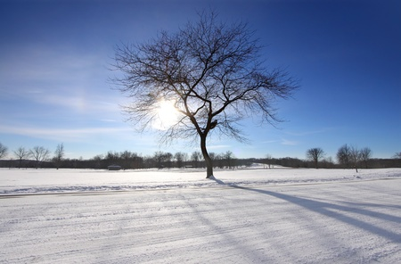 A tree in the middle of vacant land in winter time photo
