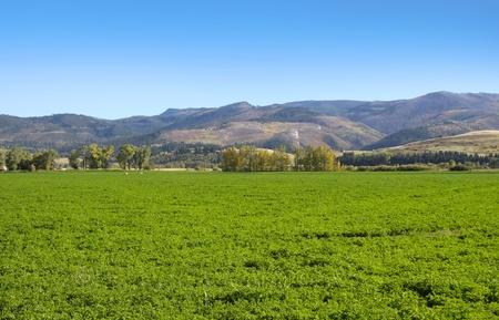 Ferme verte luxuriante aux USA Montana Banque d'images - 9167503