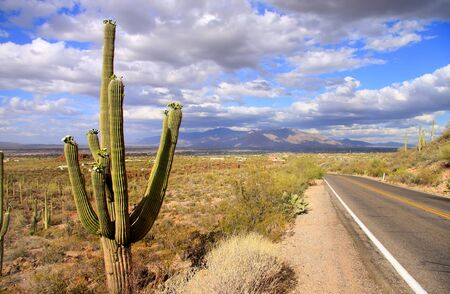 tucson: Saguaro National park