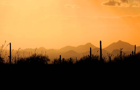 tucson: Evening scene over Saguaro national park Arizona