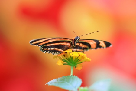 monarch butterfly on a plant Stock Photo