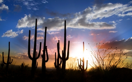 sonoran: Sun set and Saguaro cactus in Saguaro national park